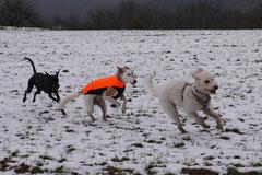 Schnuppertour Gimbacher Hof,T-Dogs,31.1.2015 Foto Nr.7