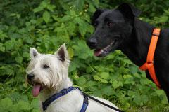 Grünwiesenweiher, T-Dogs, 6.7.14, Foto Nr.11