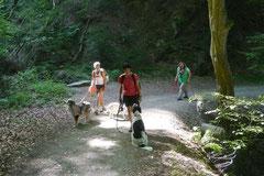 Rheinsteig Impressionen,T-Dogs, 27.07.2013 Bild Nr.14