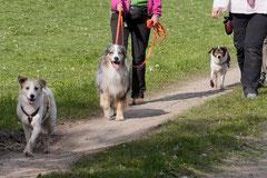 Rhön Frühlingserwachen,T-Dogs,3.+4.5.2014, Foto Nr.34