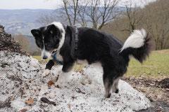 Lindenfels, T-Dogs, 7.3.2015 Foto Nr.22