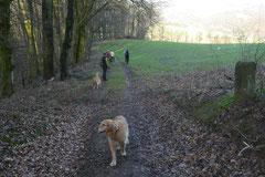 Irrbachquelle,T-Dogs,11.1.2015, Foto Nr.1