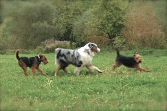 Bensheimer Weinlagen,T-Dogs,20.10.13, Foto Nr.4