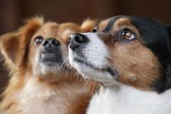 Bensheimer Weinlagen, T-Dogs, 25.1.14, Foto Nr.13