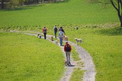 Taunushöhen,T-Dogs,18.4.2015 Foto Nr.14