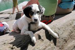 Schweiz-Tessin,T-Dogs,Mai 2014 Foto Nr.42