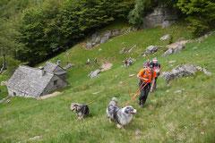 Schweiz-Tessin,T-Dogs,Mai 2014 Foto Nr.17