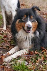 Irrbachquelle,T-Dogs,26.1.14, Foto Nr.10