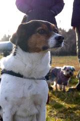 Rod an der Weil, T-Dogs,12.1.14, Foto Nr.21