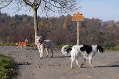 Fischbachtal,T-Dogs,23.11.2014, Foto Nr.10
