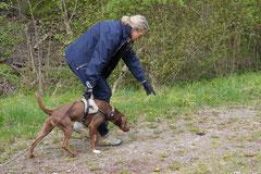Mantrailing+Wandern Rhön,T-Dogs,30.4.-3.5.2015 Foto Nr.33