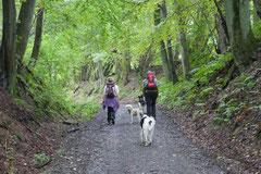 Drachenwege 2,T-Dogs,31.8.2014, Foto Nr.1
