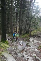 Rhön,Wellness+Wandern,T-Dogs,7.-9.11.2014, Foto Nr.17
