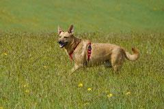 Rund um Lindenfels, T-Dogs,12.4.2014, Foto Nr.7