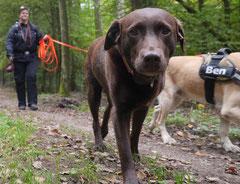 Kapersburg+Winterstein, T-Dogs, 5.10.2014, Foto Nr. 19
