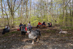 Taunushöhen,T-Dogs,18.4.2015 Foto Nr.20
