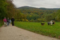 Bensheimer Weinlagen,T-Dogs,20.10.13, Foto Nr.3