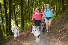 Irrbachquelle,T-Dogs, 13.7.2013, Foto Nr.4