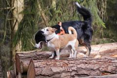 Drachenwege, T-Dogs, 8.3.2015 Foto Nr.4
