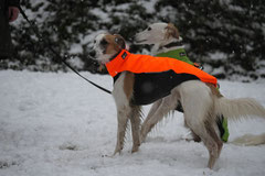 Schnuppertour Gimbacher Hof,T-Dogs,31.1.2015 Foto Nr.4