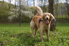 Mantrailing+Wandern Rhön,T-Dogs,30.4.-3.5.2015 Foto Nr.6