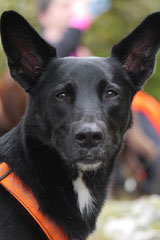 Gimbi,Staufen,Kaisertempel, T-Dogs, 12.10.2014, Foto Nr.11