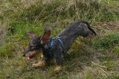 Hundeschulausflug-Sicher auf 4 Pfoten-28.9.13 Foto Nr.15