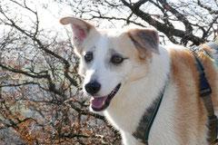 Rhön,Wellness+Wandern,T-Dogs,7.-9.11.2014, Foto Nr.31