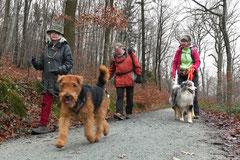 Hofheimer Kapellenberg,T-Dogs,15.12.2013, Foto Nr.4