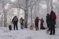 Nele Neuhaus Krimi Tour, T-Dogs, 1.2.2015 Foto Nr.7
