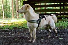 Rund um den Zacken, Trekking-Dogs,30.6.13, Foto Nr.7