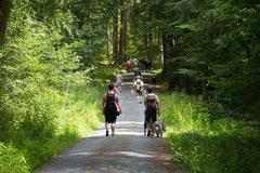 Grünwiesenweiher, T-Dogs, 6.7.14, Foto Nr.14