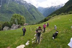 Schweiz-Tessin,T-Dogs,Mai 2014 Foto Nr.26