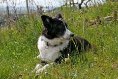 Klosterrunde, T-Dogs, 12.5.13, Foto Nr.6
