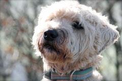 Rhön,Wellness+Wandern,T-Dogs,7.-9.11.2014, Foto Nr.32