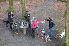 Schmitten zur Landsteiner Mühle,T-Dogs, 11.1.2014,Foto Nr.8