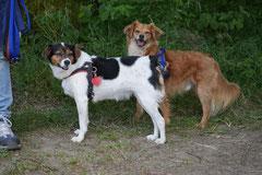 Lindenfels mit Picnic,T-Dogs,15.6.2014,Foto Nr.31