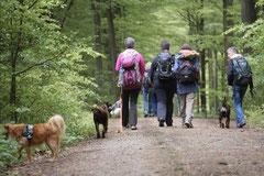 Rhön Frühlingserwachen,T-Dogs,3.+4.5.2014, Foto Nr.2