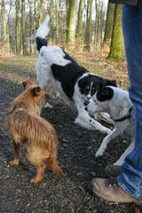 Schmitten zur Landsteiner Mühle,T-Dogs, 11.1.2014,Foto Nr.11