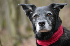 Gimbi,Staufen,Kaisertempel,T-Dogs,2.2.2014, Foto Nr.9