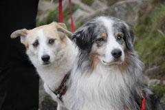 Rhön Frühlingserwachen,T-Dogs,3.+4.5.2014, Foto Nr.28