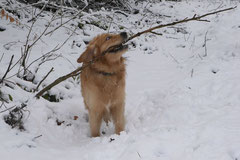 Nele Neuhaus Krimi Tour, T-Dogs, 1.2.2015 Foto Nr.22