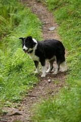 Schweiz-Tessin,T-Dogs,Mai 2014 Foto Nr.22