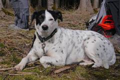 Drachenwege, T-Dogs, 8.3.2015 Foto Nr.26