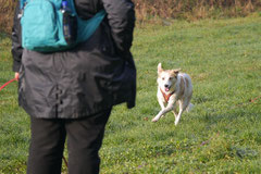 Bensheimer Weinlagen, T-Dogs, 25.1.14, Foto Nr.2