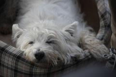 Gimbi,Staufen,Kaisertempel, T-Dogs, 12.10.2014, Foto Nr.19