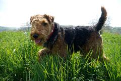 Bensheimer Weinlagen, T-Dogs, 5.5.13, Foto Nr.11