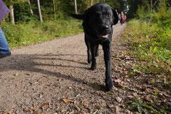 Hundeschulausflug Sicher auf 4 Pfoten, Grüner See, 28.9.14, Foto Nr.12