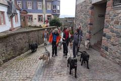 Lindenfels, T-Dogs, 7.3.2015 Foto Nr.18