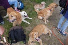 Lindenfels mit Picnic,T-Dogs,15.6.2014,Foto Nr.24